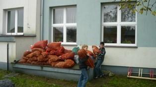 Zbiórka kasztanów
